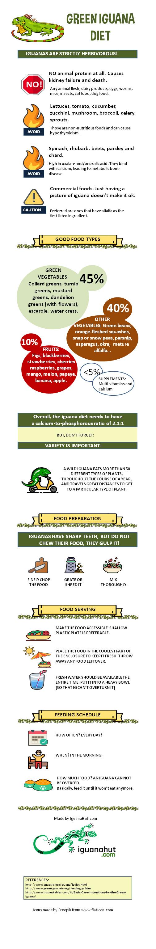 Infographic about Iguana feeding